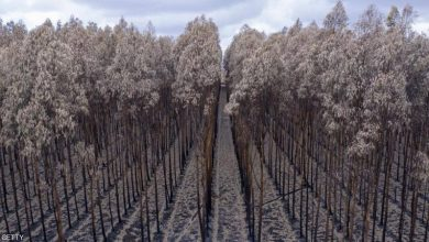 "Photo of ""معجزة الطبيعة"": عواصف أستراليا تطفئ حرائقها"