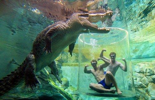 Photo of متنزه يتيح لزواره مواجهه التماسيح وجها لوجه تحت الماء!