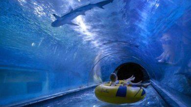 Photo of أكوا بارك تفتتح أول منزلق مائي دوار في العالم… مع مشاهدة أسماك القرش