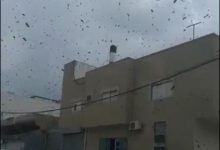 Photo of كميات كبيرة من النحل في مدينة الطيرة ظن الاهالي انها سرب من الجراد