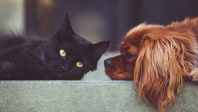Photo of كورونا وحيوانك الأليف: هل دق ناقوس الخطر؟