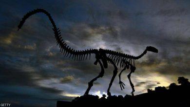 """Photo of دراسة حديثة """"تنفي"""" نظريات """"انقراض الديناصورات"""" القديمة"""