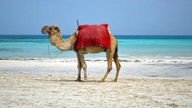 Photo of أجمل الجزر السياحية العربية