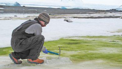 """Photo of أنتاركتيكا تكتسي بـ""""الأخضر"""" – دراسة تكشف كل شيء"""