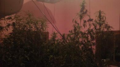 Photo of الشرطة وصلت للتعامل مع حادثة عنف وفي المكان اكتشفوا مختبر لزراعة القنابس