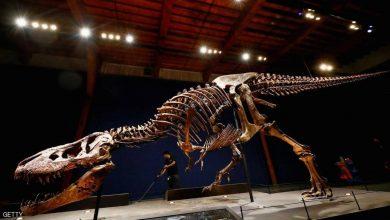 Photo of باحثون يعثرون على عظام ديناصور من فصيلة تي ركس