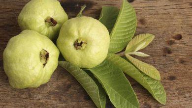 صورة فوائد الجوافة للنساء لا توصف!