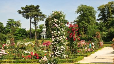 صورة أجمل حدائق الورود في العالم